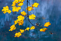 Tree branch and colorful leaves in National Park Plitvice Lakes, Lika, Croatia